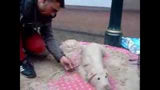 Cute Dog Sand Sculpture Sand Art