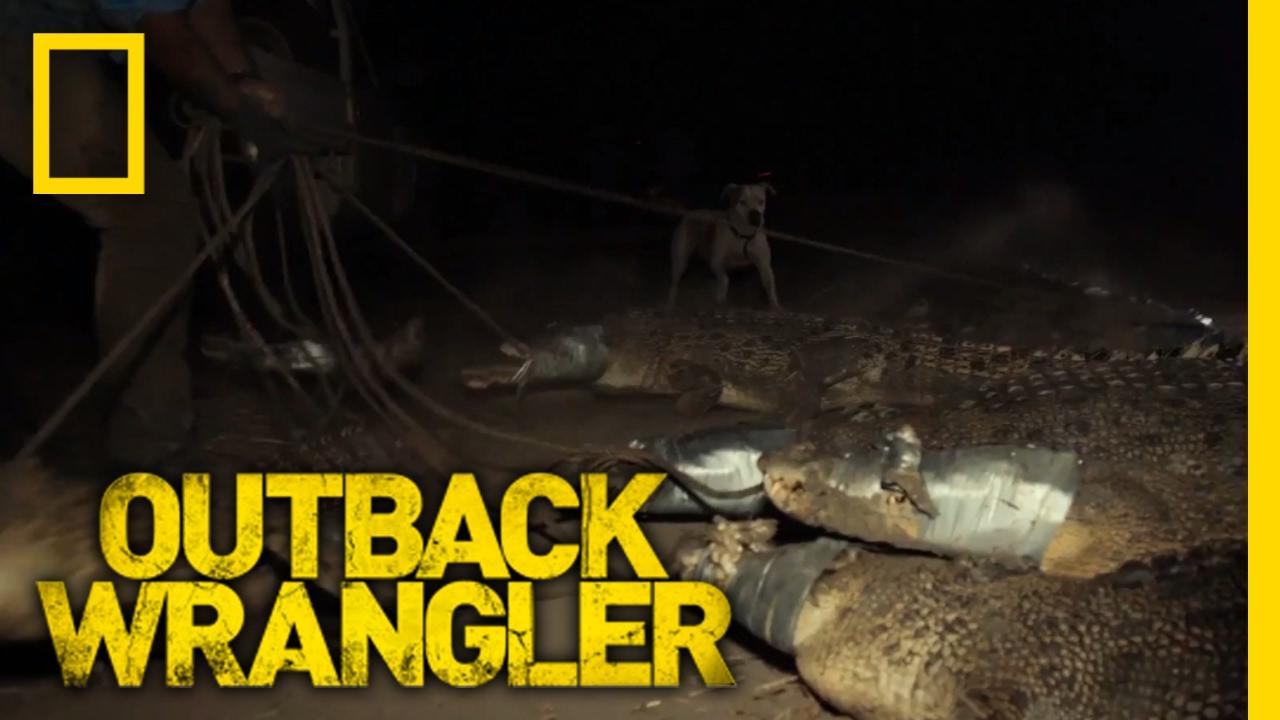 Download A River Full of Crocs | Outback Wrangler