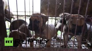 South Korea: Over 100 Dogs And Puppies Rescued From Dog Meat Farm