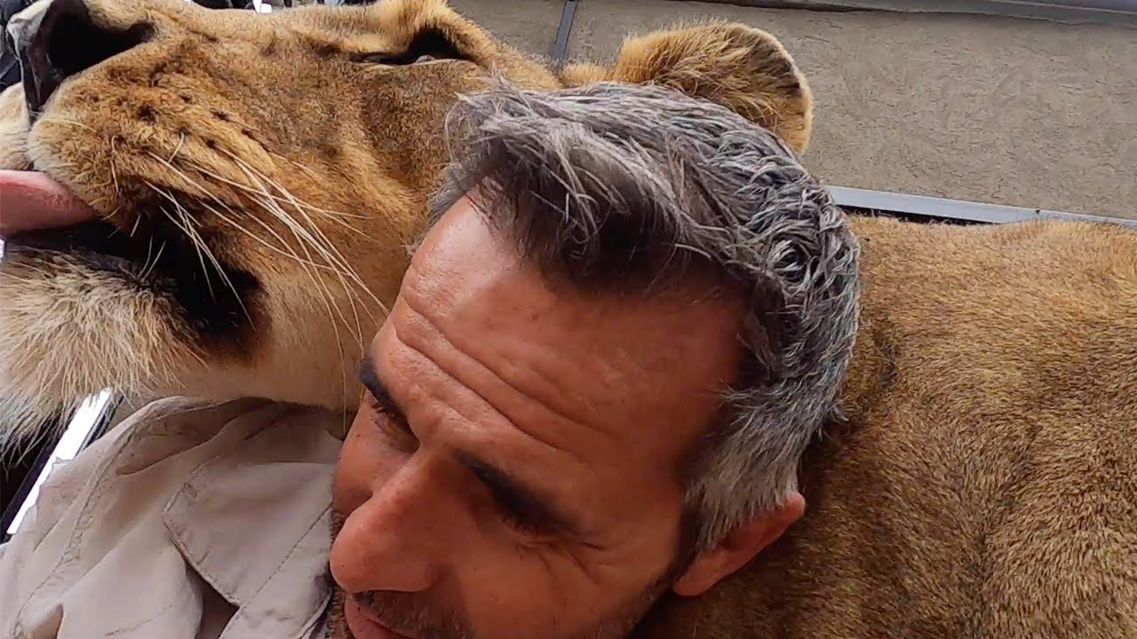 Mischief Maker – Gabby the Lioness | The Lion Whisperer