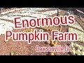 Burts Pumpkin Farm  Dawsonville,GA
