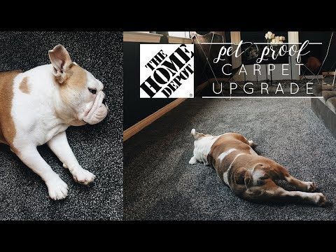 Making the switch! | PetProof Carpet with Home Depot
