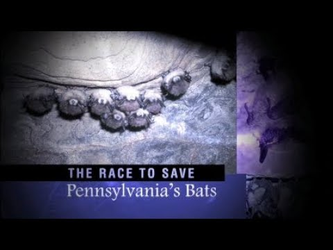 The Race to Save Pennsylvania's Bats