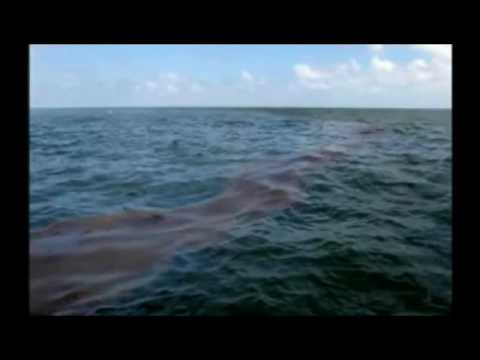 Im Not Ready to Make Nice - Dixie Chicks to BP Oil Spill Footage