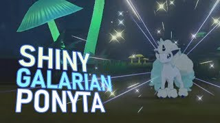 497 - LIVE! Shiny Galarian Ponyta in Shield after 1608 REs! (+ Evolution)
