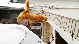 Waffles The Terrible - Funny Cat Fails Epic Jump