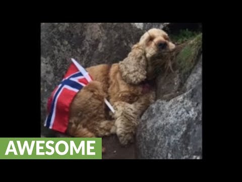 Exhausted dog sleeps after mountain hike