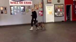 21 Year Old Dog Trainer Demonstrates Obedience Training. Sit Means Sit Cleveland-akron
