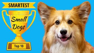 Smartest Small Dogs: Top 10 Small But Highly Intelligent Dog Breeds