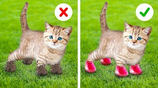 AWW! Brilliant Hacks For Pet Owners! Clothing Hacks, Cool Gadgets, Photo Tricks By A PLUS SCHOOL