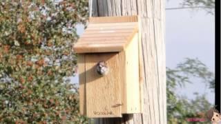Woodlink Wooden Bluebird House