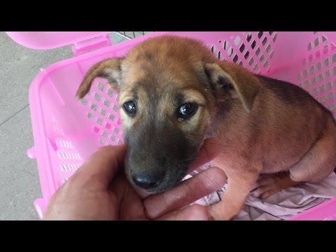 Sad Dog Story... Abandoned Puppy (Dumped next to the lake)