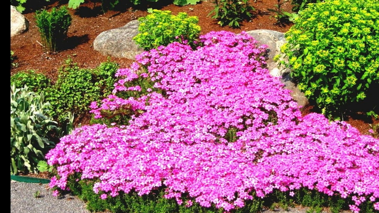 Full Sun Landscape Designn Flower Garden Design You