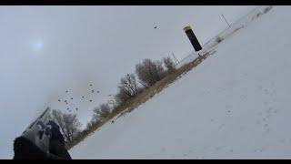 Серая куропатка охота зимой видео