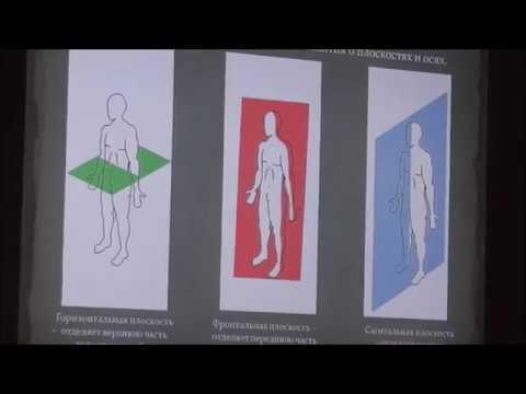 Понятие о плоскостях и осях  Функциональная анатомия  Воскресенский А Н