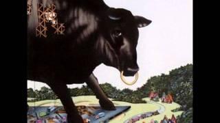 Bull Angus - CY