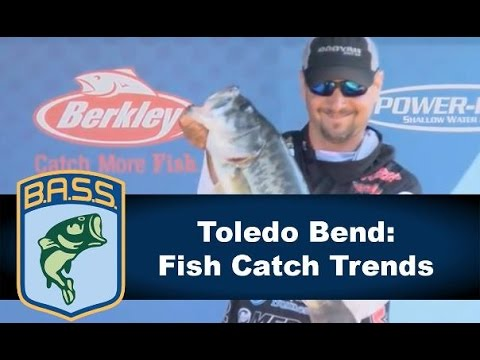 Toledo Bend: Fish Catch Trends