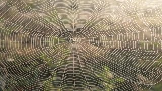 Teia de médica de aranha fita