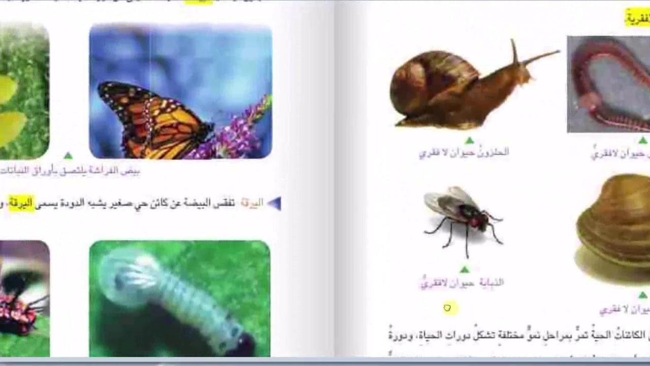 دورة حياة الحيوانات اللافقرية الجزء الاول للصف الرابع الابتدائي