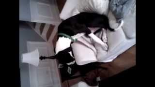 Puppy Caught Eating The Couch