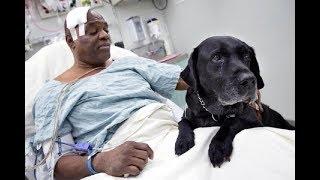 Невероятные  спасения людей  домашними животными