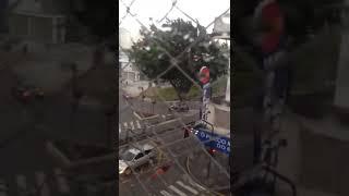 Árvore de grande porte é arrancada, no Centro de Jaraguá do Sul, durante vendaval