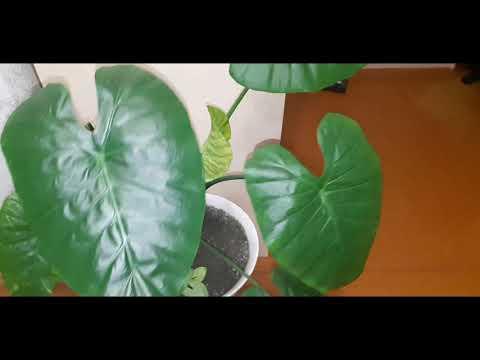 Вопрос: Комнатные растения можно пересаживать в октябре?