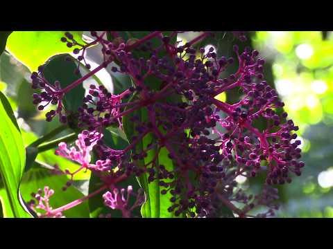 Hawaii Tropical Botanical Garden 2 min Music video