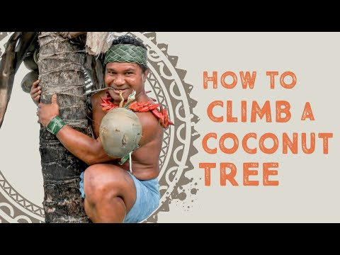 How To Climb Coconut Tree