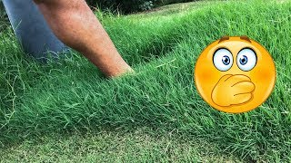 Fall Lawn Treatments - PGF Complete Results