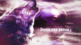 Звуки животных Вой волка для монтажа