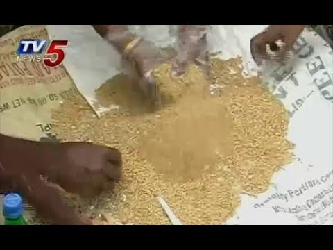 How to do Seed treatment with Pseudomonas : TV5 News