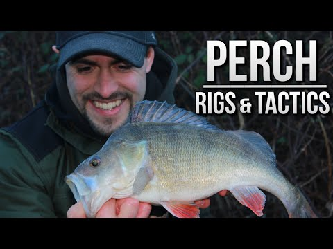 Perch fishing with waggler and prawns doovi for White perch fishing rigs