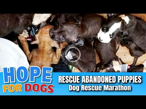 Hope Rescues Abandoned Puppies in BurnedOut House