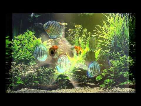 Самые необычные аквариумы. Фото 12-ти самых необычных аквариумов