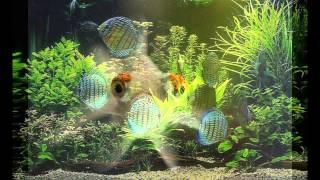фото рыбок в аквариуме