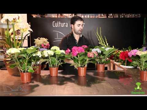 El jardinero en casa geranios y gitanillas doovi - El jardinero en casa ...