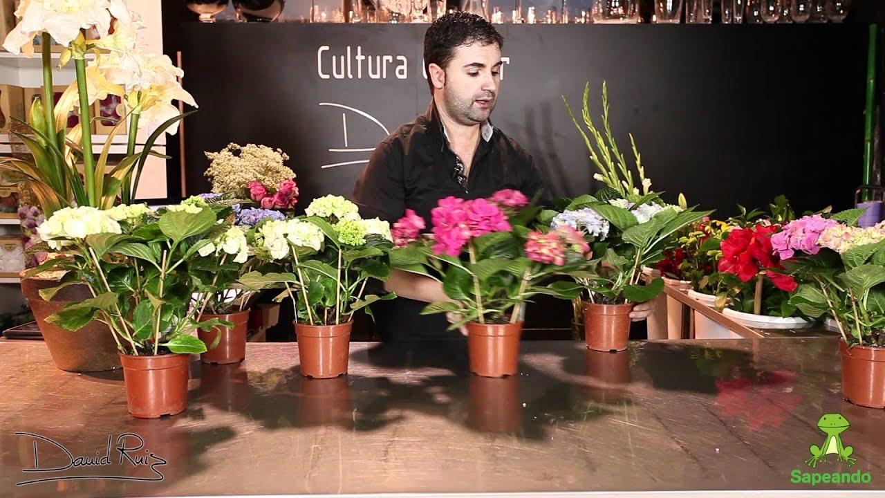 Cuidados de una hortensia youtube - Cuidados de las hortensias ...