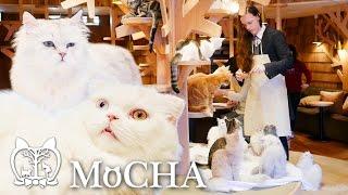 Video Cat Café MoCHA [Deerstalker in Japan] download MP3, 3GP, MP4, WEBM, AVI, FLV September 2018