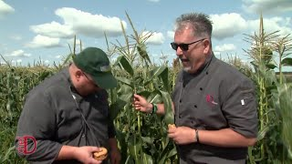 Cooking with Corn at Herrles Country Farm Market