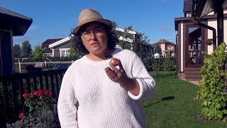 видео Как сажать луковичные: выкапываем и сажаем луковицы цветов