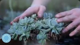 How To Plant And Grow Succulents - Martha Stewart