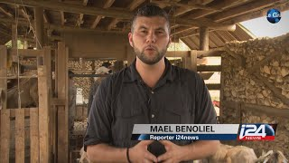 The new and organic way to volunteer on a farm in Israel - Mael Benoliel for i24news