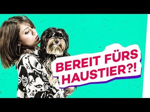 Haustiere zum Kuscheln! Hund, Katze, Hamster - welches Tier passt zu mir?