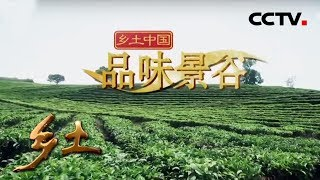 《乡土》 20190731 乡土中国 品味景谷| CCTV农业