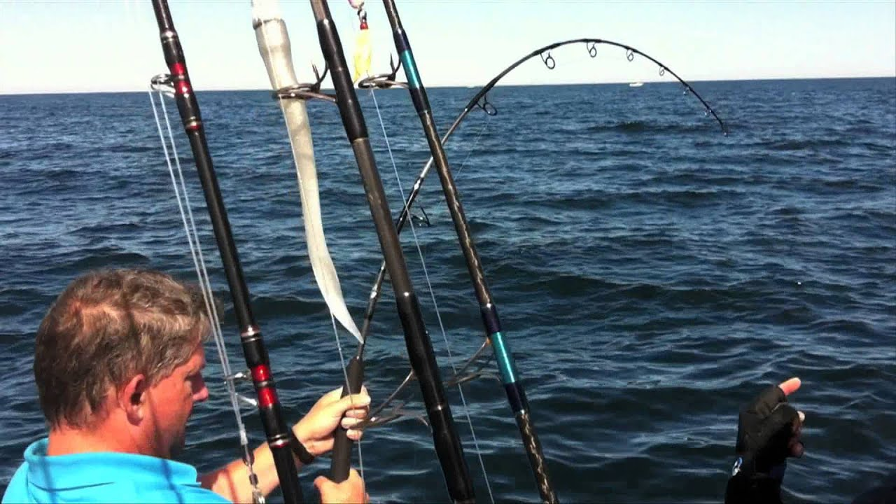 Bluefin tuna fishing cape cod 2011 get reel fishing for Tuna fishing video