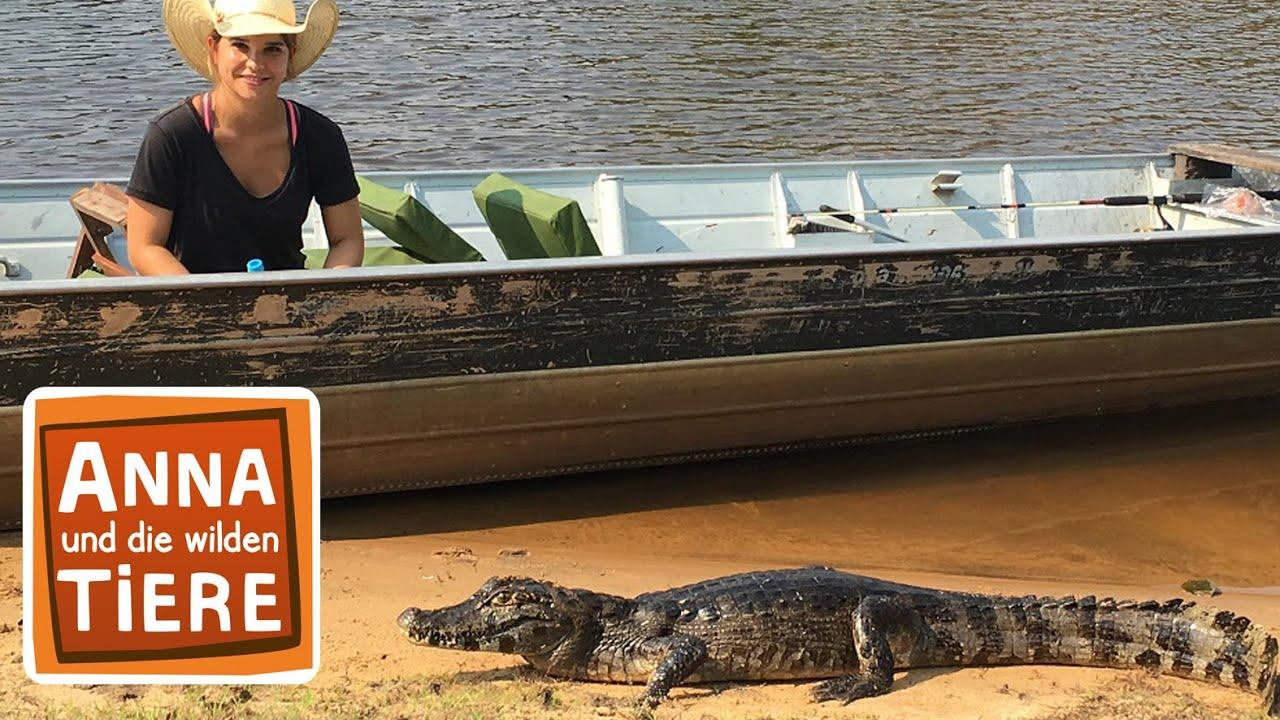 Wenn Krokodile Babys Haben Doku Reportage Fur Kinder Paula Und Die Wilden Tiere Youtube