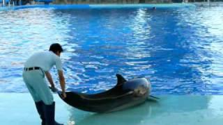 名古屋港水族館 トレーナーと遊ぶイルカ thumbnail