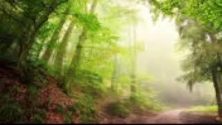 Peder B Helland Forest Whisper