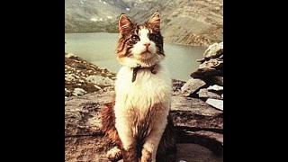 Как зовут кошку? Рассказ